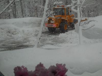 3月23日(木)  0℃  雪_f0210811_08161693.jpg