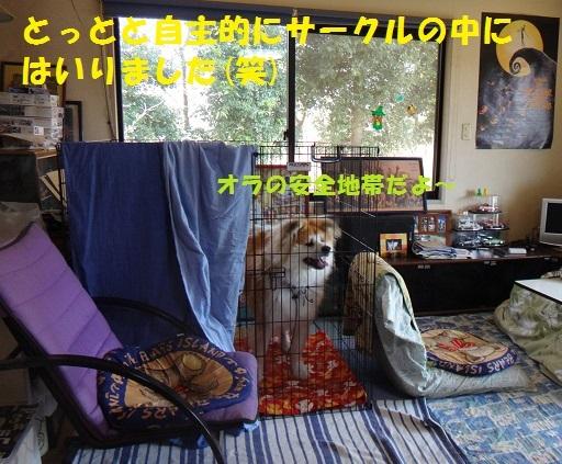 f0121712_14563015.jpg