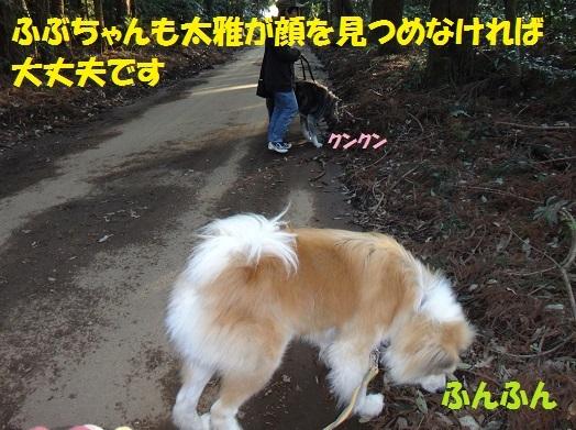 f0121712_15354310.jpg