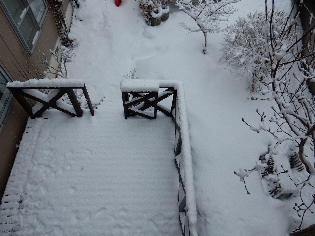 春への進行リセット_c0025115_20292004.jpg