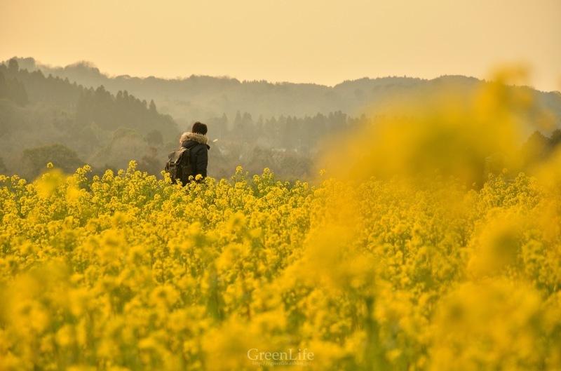 菜の花列車は夢の中へ_f0321522_20333045.jpg