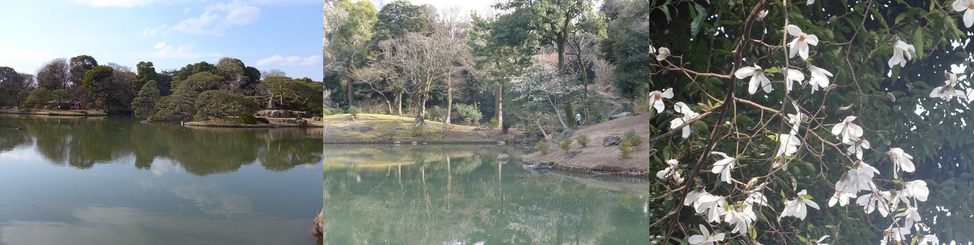 咲き始めた桜を愛でながら、、、看護師特定行為、臨床研修、医療計画_b0115629_23282753.jpg