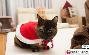 クリスマス撮影秘話☆その2_d0355333_11350818.jpg