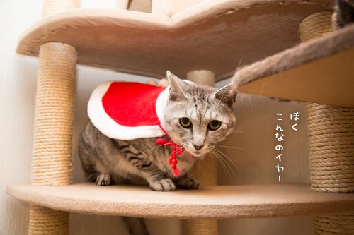 クリスマス撮影秘話☆その3_d0355333_11350847.jpg