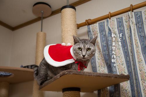 クリスマス撮影秘話☆その3_d0355333_11350857.jpg