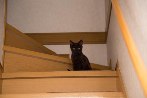階段の見張り番_d0355333_11352842.jpg