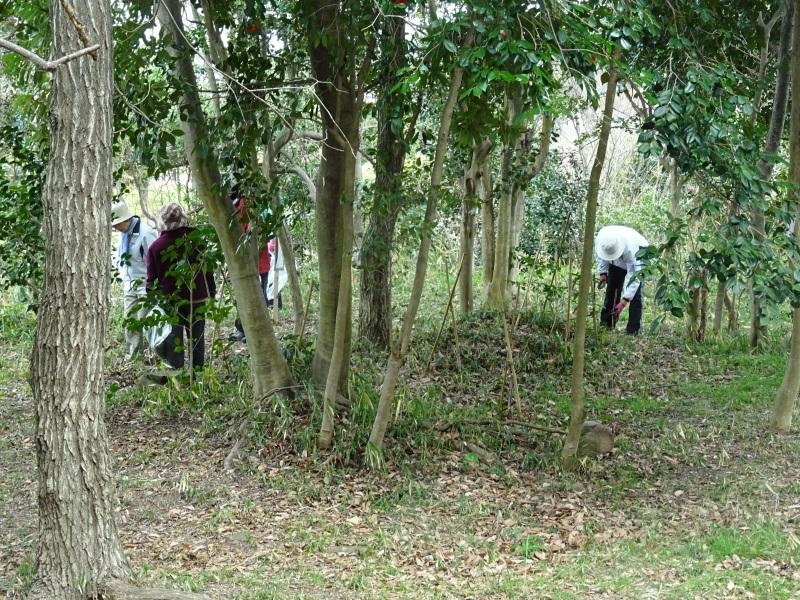 うみべの森を育てる会:3月度運営委員会_c0108460_20355269.jpg
