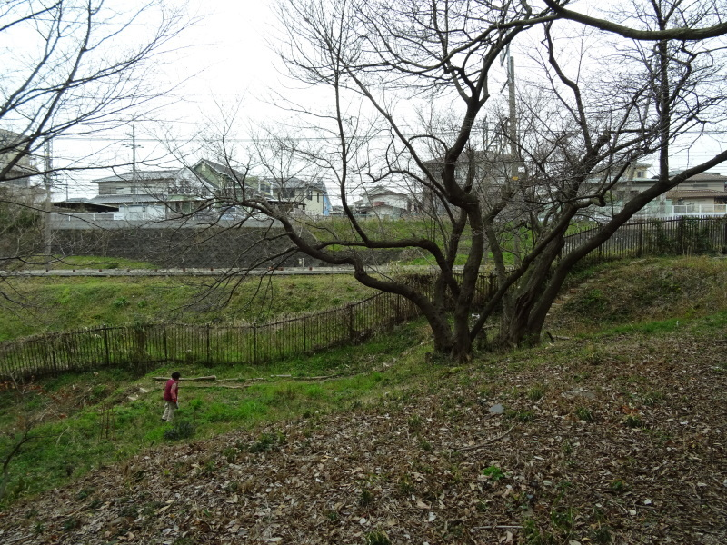 うみべの森を育てる会:3月度運営委員会_c0108460_20361892.jpg