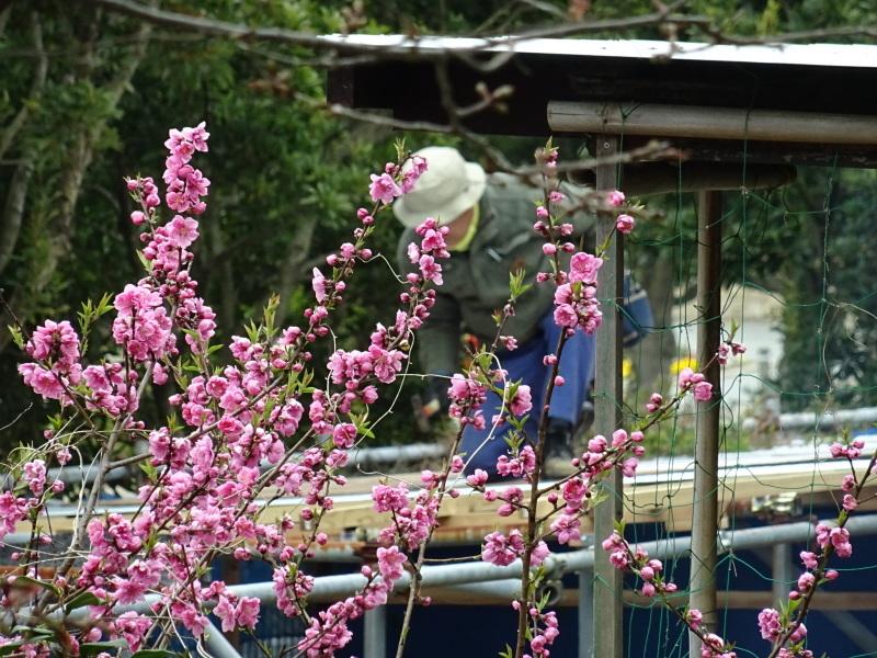 うみべの森を育てる会:3月度運営委員会_c0108460_20362103.jpg