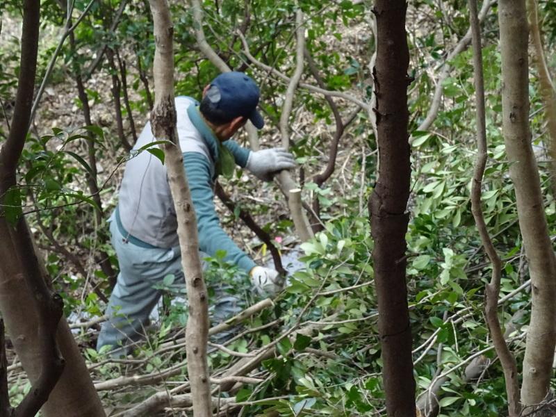 うみべの森を育てる会:3月度運営委員会_c0108460_20364755.jpg