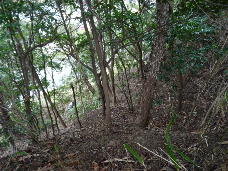 うみべの森を育てる会:3月度運営委員会_c0108460_20365002.jpg