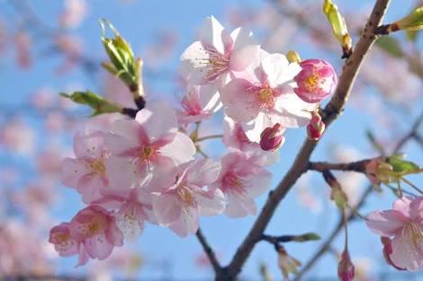 花見の会開催のご案内_c0253669_17504838.jpg