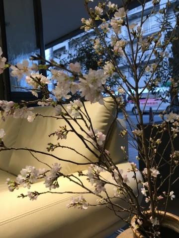 春の陽気_e0172872_17452221.jpg