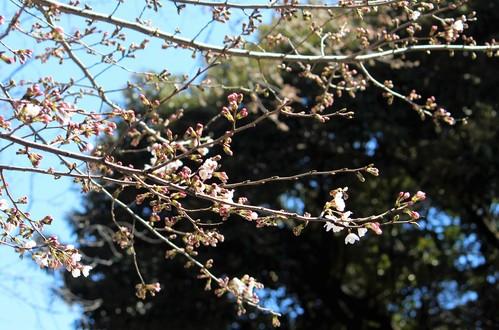 桜_e0094102_1259182.jpg