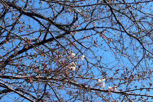 桜_e0094102_131969.jpg
