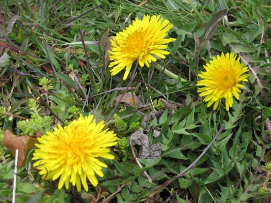 菜園の花がスタート_e0048413_18112641.jpg