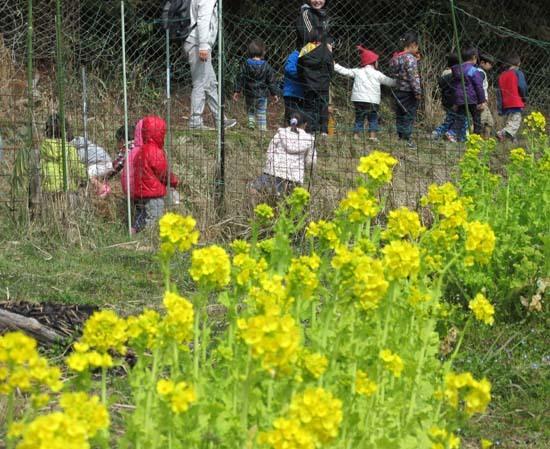 菜園の花がスタート_e0048413_18120132.jpg
