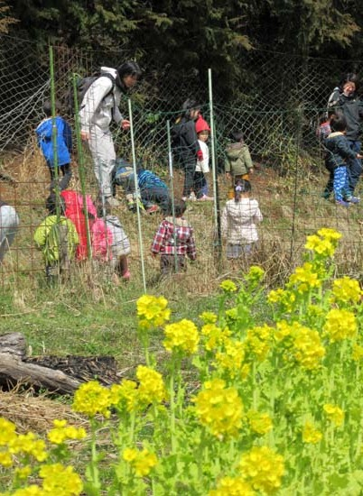 菜園の花がスタート_e0048413_18120665.jpg