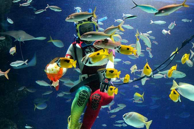 サンシャイン水族館~「水中パフォーマンス・バレンタインVer.」_b0355317_21355194.jpg