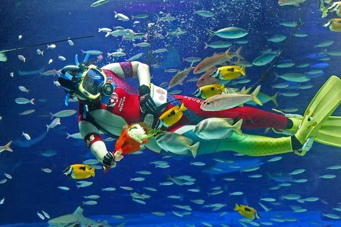 サンシャイン水族館~「水中パフォーマンス・バレンタインVer.」_b0355317_21381880.jpg