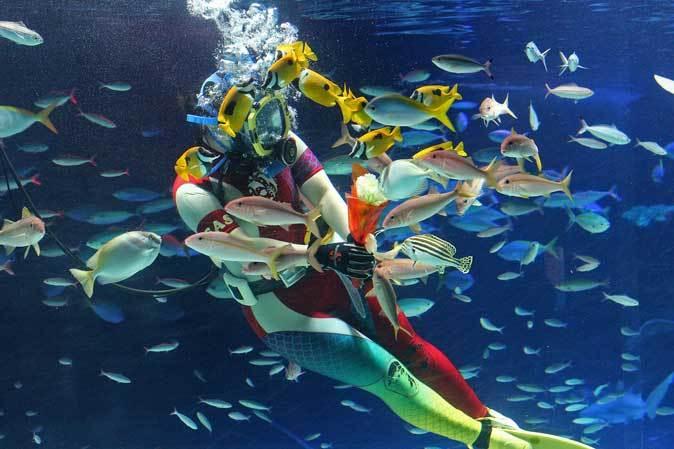 サンシャイン水族館~「水中パフォーマンス・バレンタインVer.」_b0355317_21425472.jpg