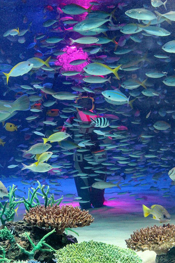 サンシャイン水族館~「水中パフォーマンス・バレンタインVer.」_b0355317_21441681.jpg