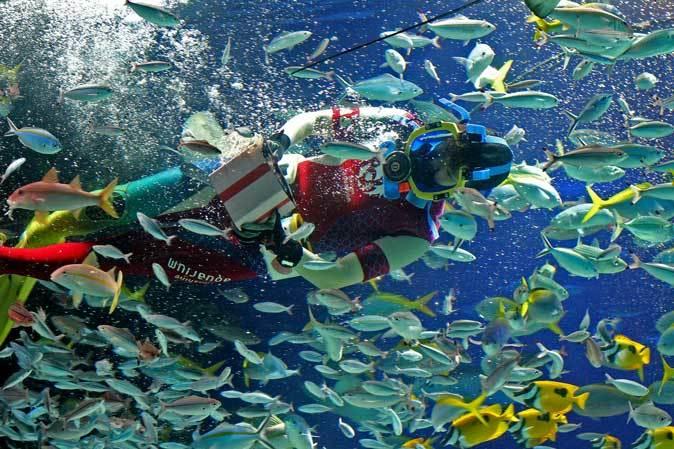 サンシャイン水族館~「水中パフォーマンス・バレンタインVer.」_b0355317_21451746.jpg