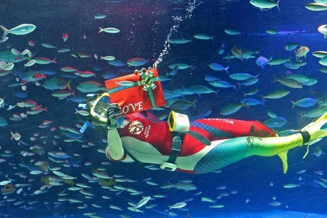 サンシャイン水族館~「水中パフォーマンス・バレンタインVer.」_b0355317_21460423.jpg