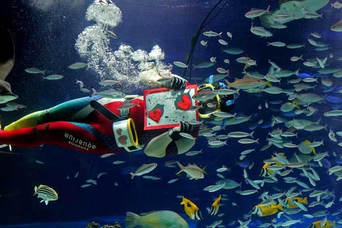 サンシャイン水族館~「水中パフォーマンス・バレンタインVer.」_b0355317_21481476.jpg