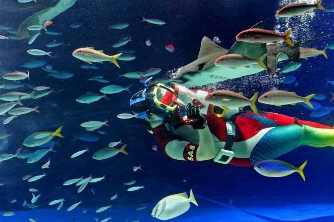 サンシャイン水族館~「水中パフォーマンス・バレンタインVer.」_b0355317_21485516.jpg