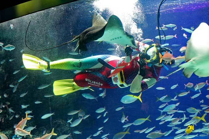 サンシャイン水族館~「水中パフォーマンス・バレンタインVer.」_b0355317_21534330.jpg