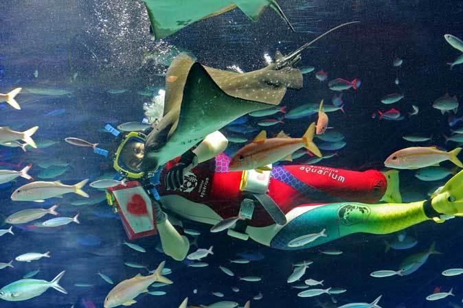 サンシャイン水族館~「水中パフォーマンス・バレンタインVer.」_b0355317_21552206.jpg