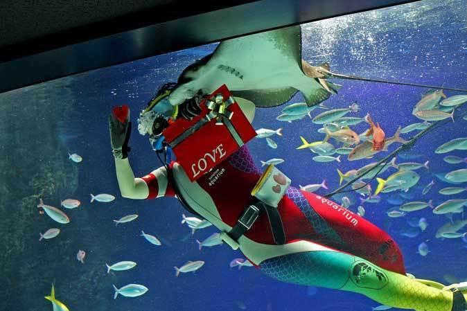 サンシャイン水族館~「水中パフォーマンス・バレンタインVer.」_b0355317_21555622.jpg