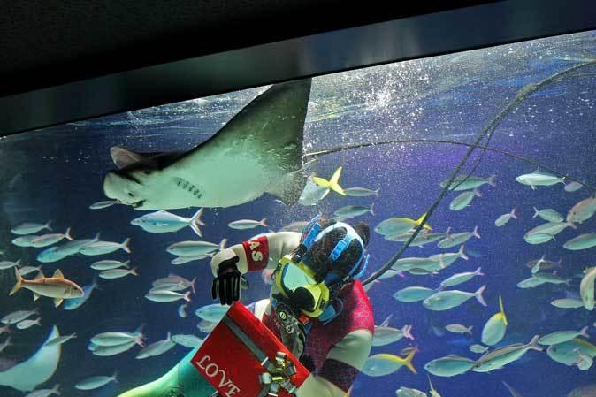 サンシャイン水族館~「水中パフォーマンス・バレンタインVer.」_b0355317_21570284.jpg