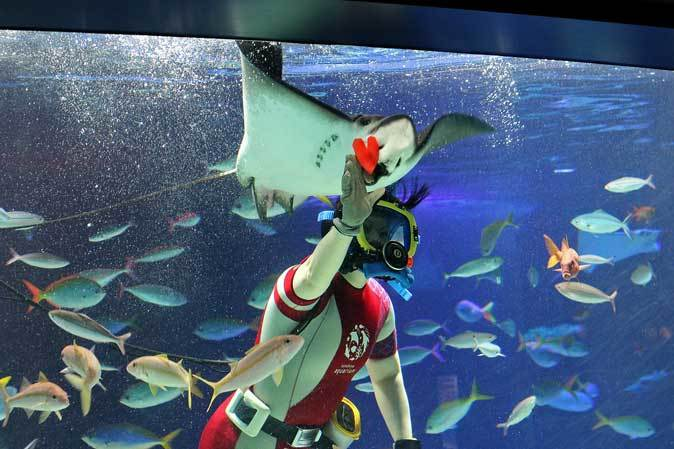 サンシャイン水族館~「水中パフォーマンス・バレンタインVer.」_b0355317_21574351.jpg