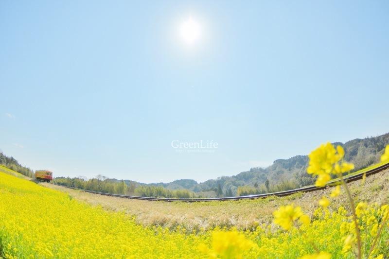 春の小湊鉄道遠足♪_f0321522_09543738.jpg