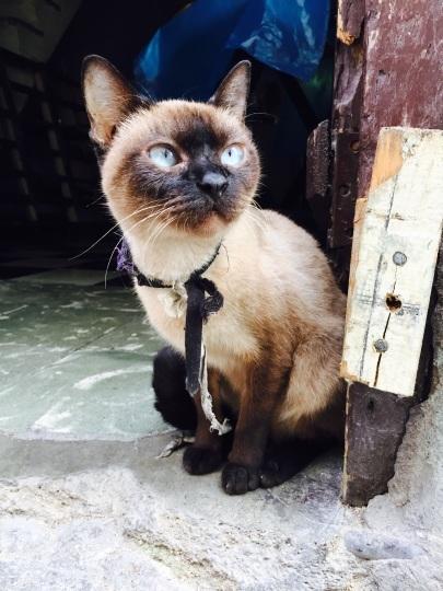 吾輩はキューバの猫である。  _a0103940_00304700.jpg