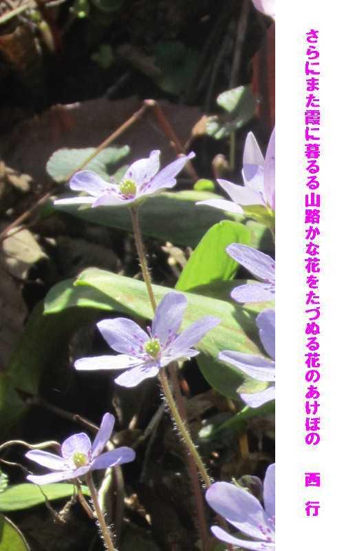 f0117041_04432558.jpg