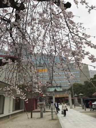警固神社のしだれ桜_b0214473_2275540.jpg