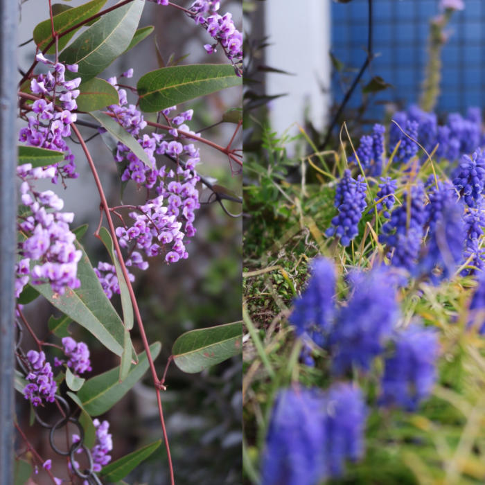 4月は春のコリアンとガーデニング_c0116778_11004350.jpg
