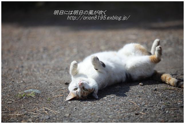 f0361079_20121392.jpg