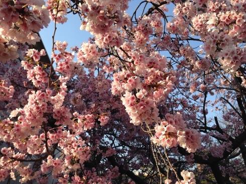 春到来。_e0190287_21020736.jpg
