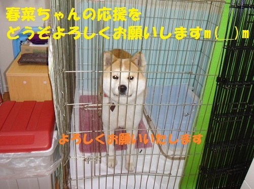 f0121712_01062770.jpg