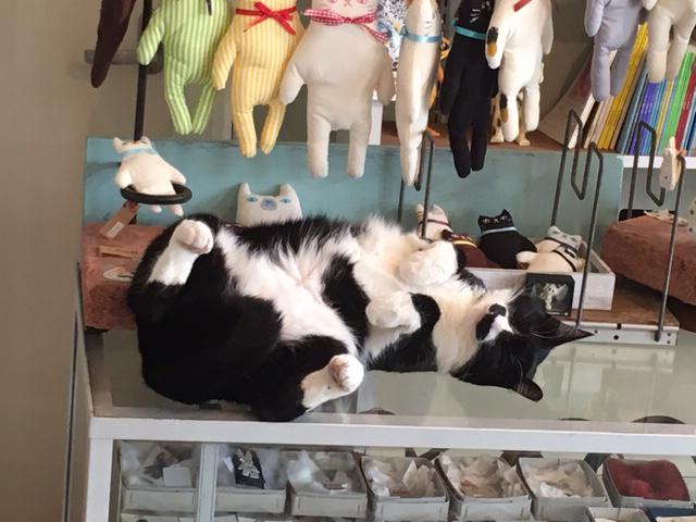 仰向け猫とほっかむりちゃんダルマ完売とwaccaブローチとサコッシュと桜のお菓子 - ひよこ雑貨店(4冊目)