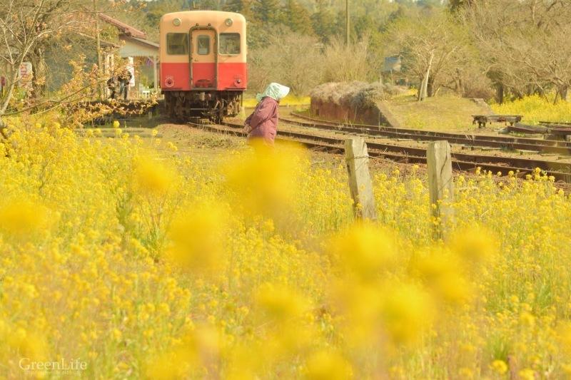 春の小湊鉄道遠足♪_f0321522_18165212.jpg