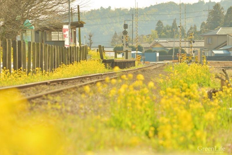 春の小湊鉄道遠足♪_f0321522_18191124.jpg
