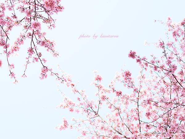 b0280329_20103643.jpg