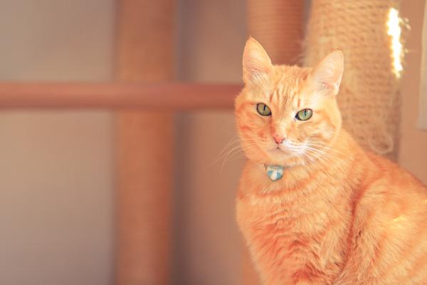 にゃんず日記と登場猫人たちの紹介_d0355333_12275787.jpg