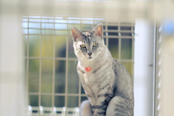にゃんず日記と登場猫人たちの紹介_d0355333_12280174.jpg