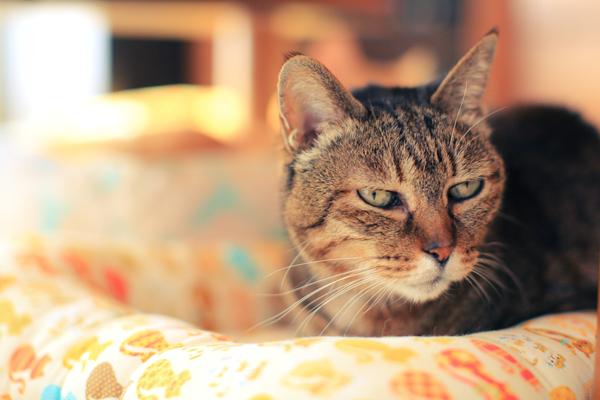 にゃんず日記と登場猫人たちの紹介_d0355333_12280514.jpg